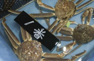 兵庫県の香住漁港に水揚げされたばかりの「一番(最高級)」松葉ガニ。