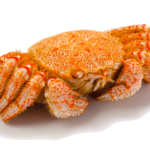 日本の四大蟹様とは【2】毛ガニ