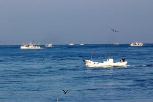 以前の取材で撮影した大間のマグロ漁船群。