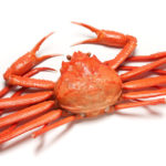 日本の蟹様【1】ベニズワイガニ