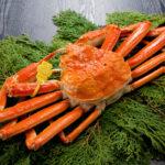 日本の四大蟹様とは【1】ズワイガニ