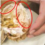 【追跡調査】毛蟹のカニ味噌の周りについている、激ウマ白い塊の正体は・・・え!?